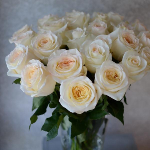 Розы Талея