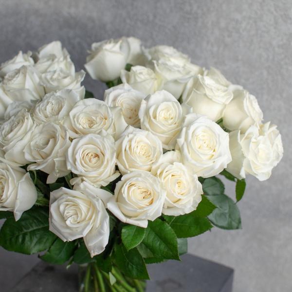 Розы Плайя Бланка