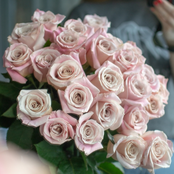 Розы Фейт